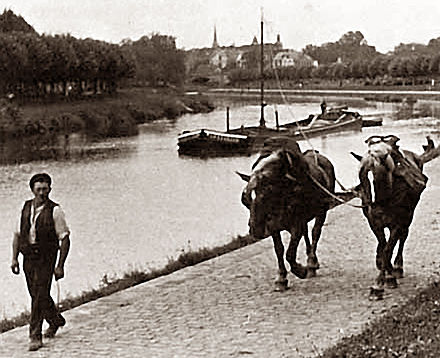 horse pulls barge in canal